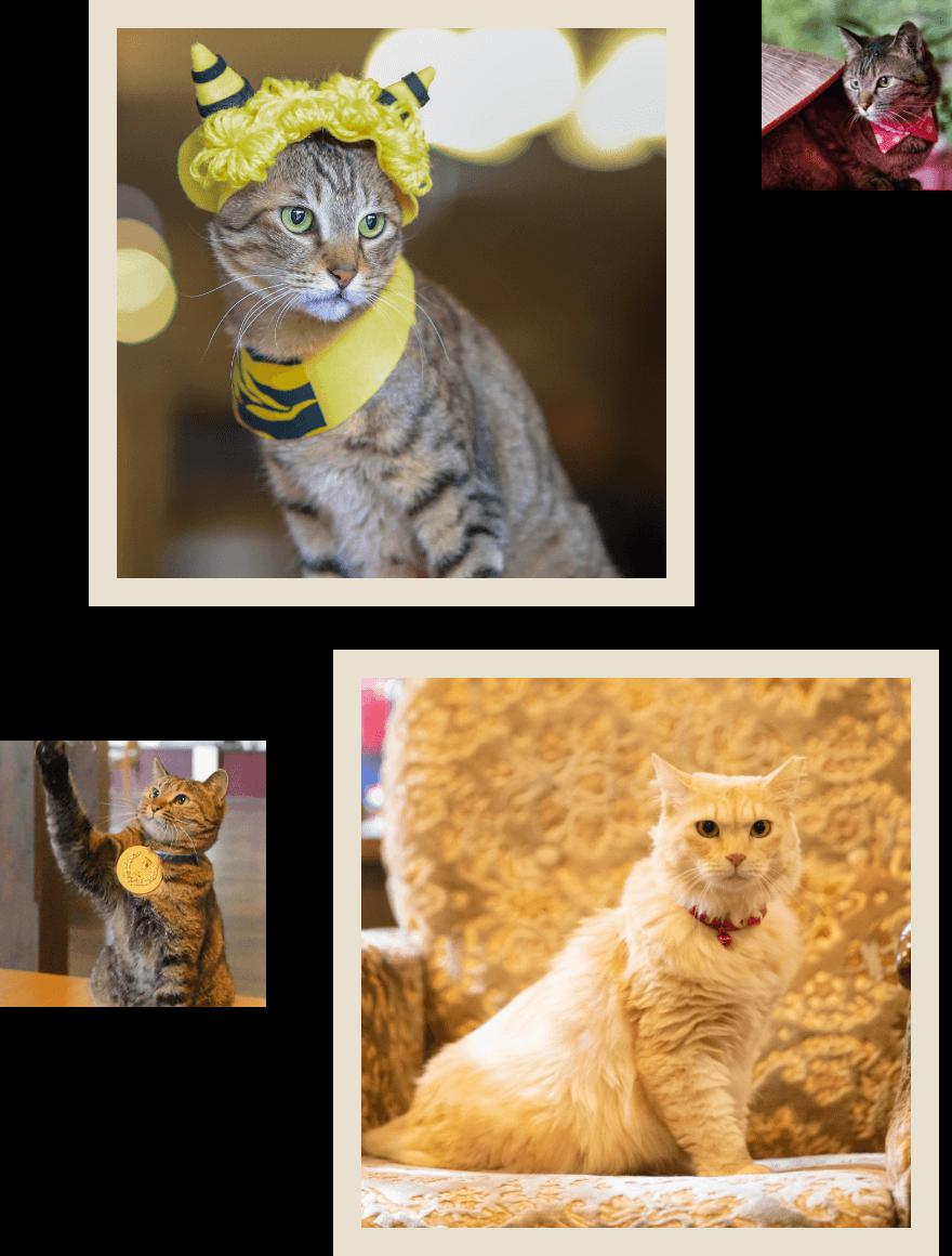 看板猫にゃんの写真01