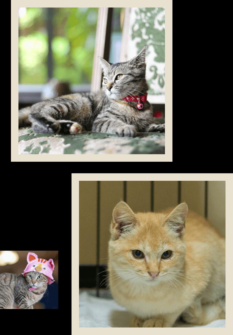 看板猫にゃんの写真02