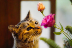 お花とゆずにゃん