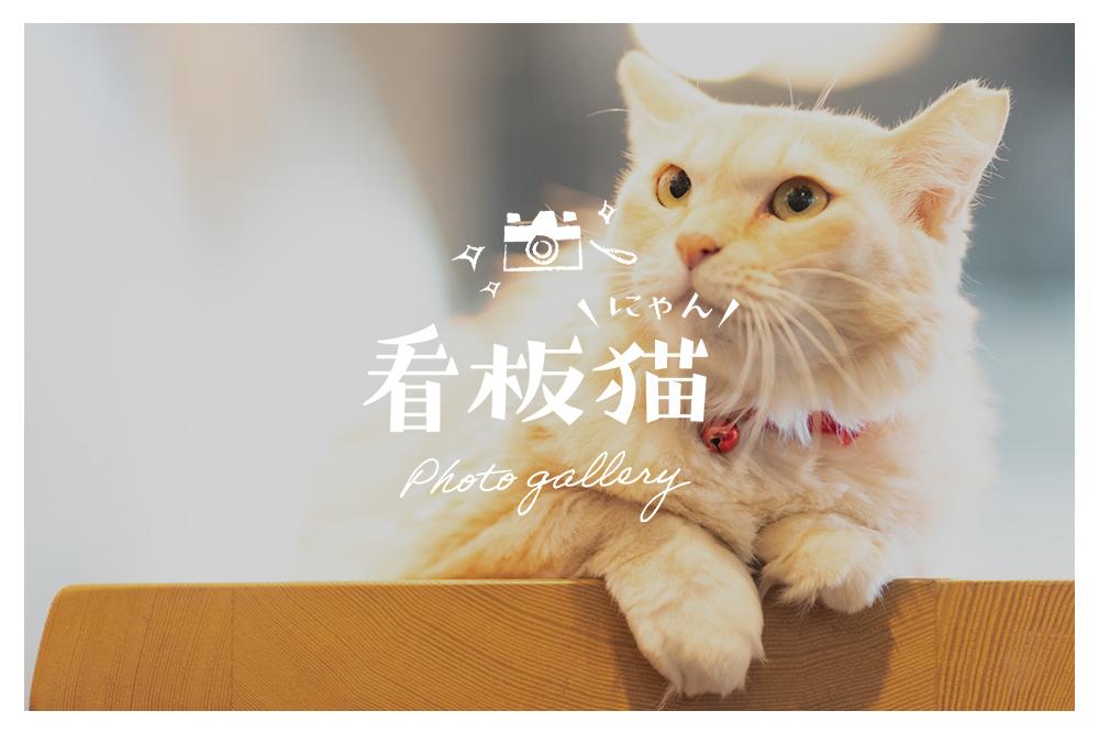 看板猫 GALLERY vol.3